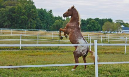 Spontaneous Rearing and Food Aggression in Horses