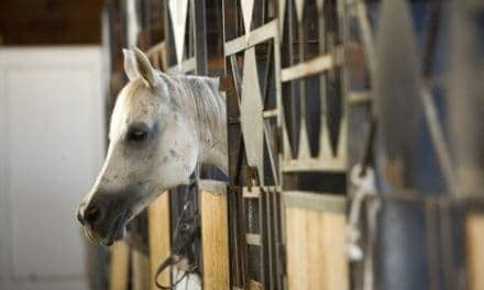 Owners Reluctant to Change Asthmatic Horses' Environments