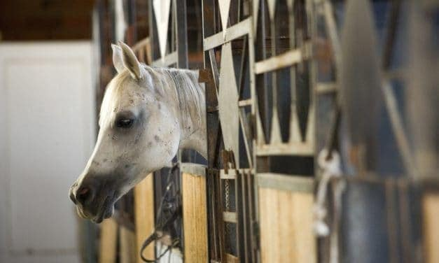 What to Do if a Horse Tests Positive for <em>Salmonella</em>