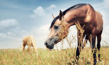 Heat Waves, Pollen Could Worsen Equine Asthma Signs