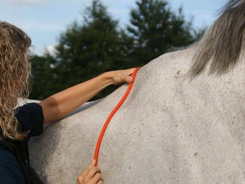 Exercise's Effects on Horses' Back Dimensions and Saddle Fit