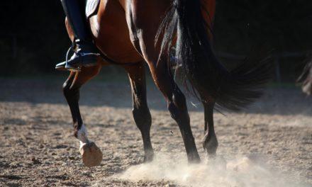 Are Unshod Dressage Horses at a Competitive Disadvantage?