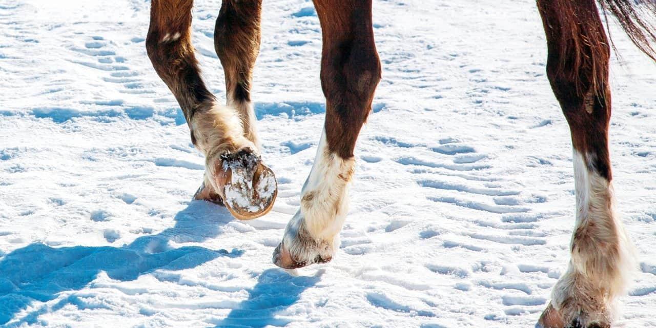 Poll Recap: Winter Shoeing Solutions