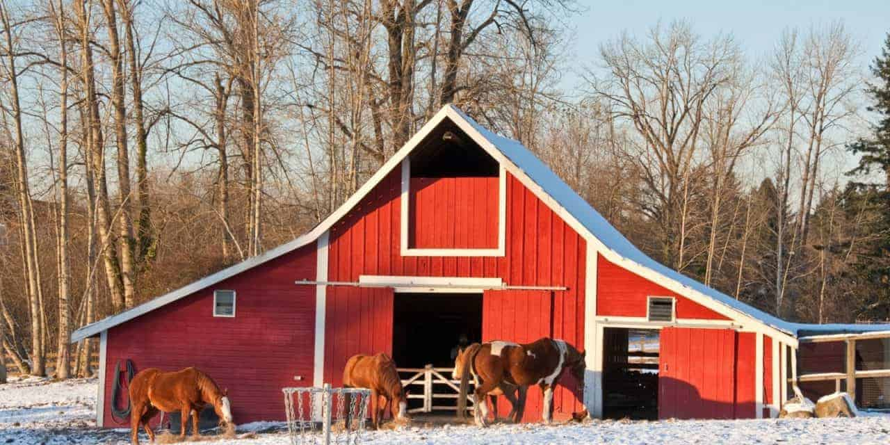 Heated Barns And Horses Special Considerations Needed The
