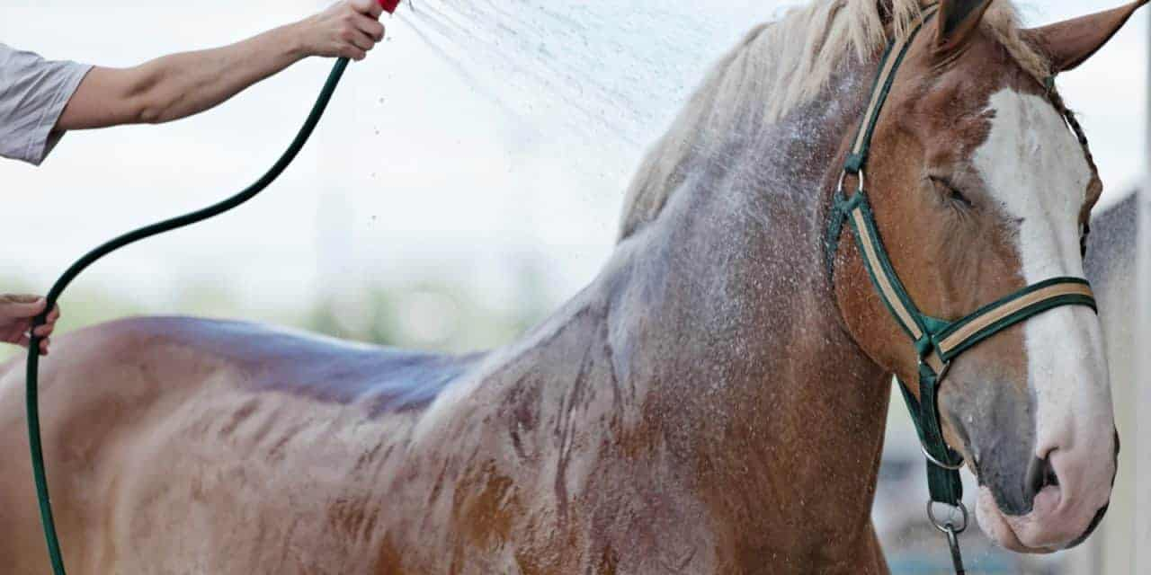 Watch How to Clip Your Horse video