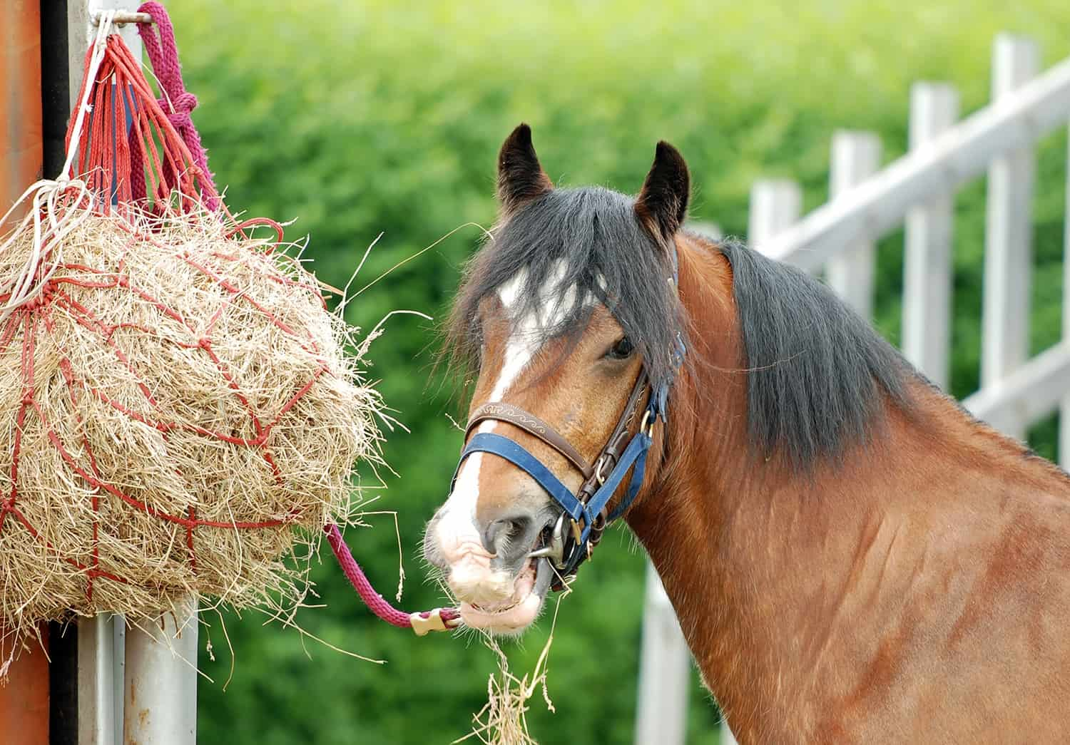 Is it Okay to Ride my Ulcer-Prone Horse After Feeding?