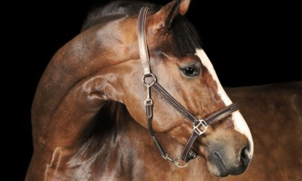 Navigating Equine Neck Problems