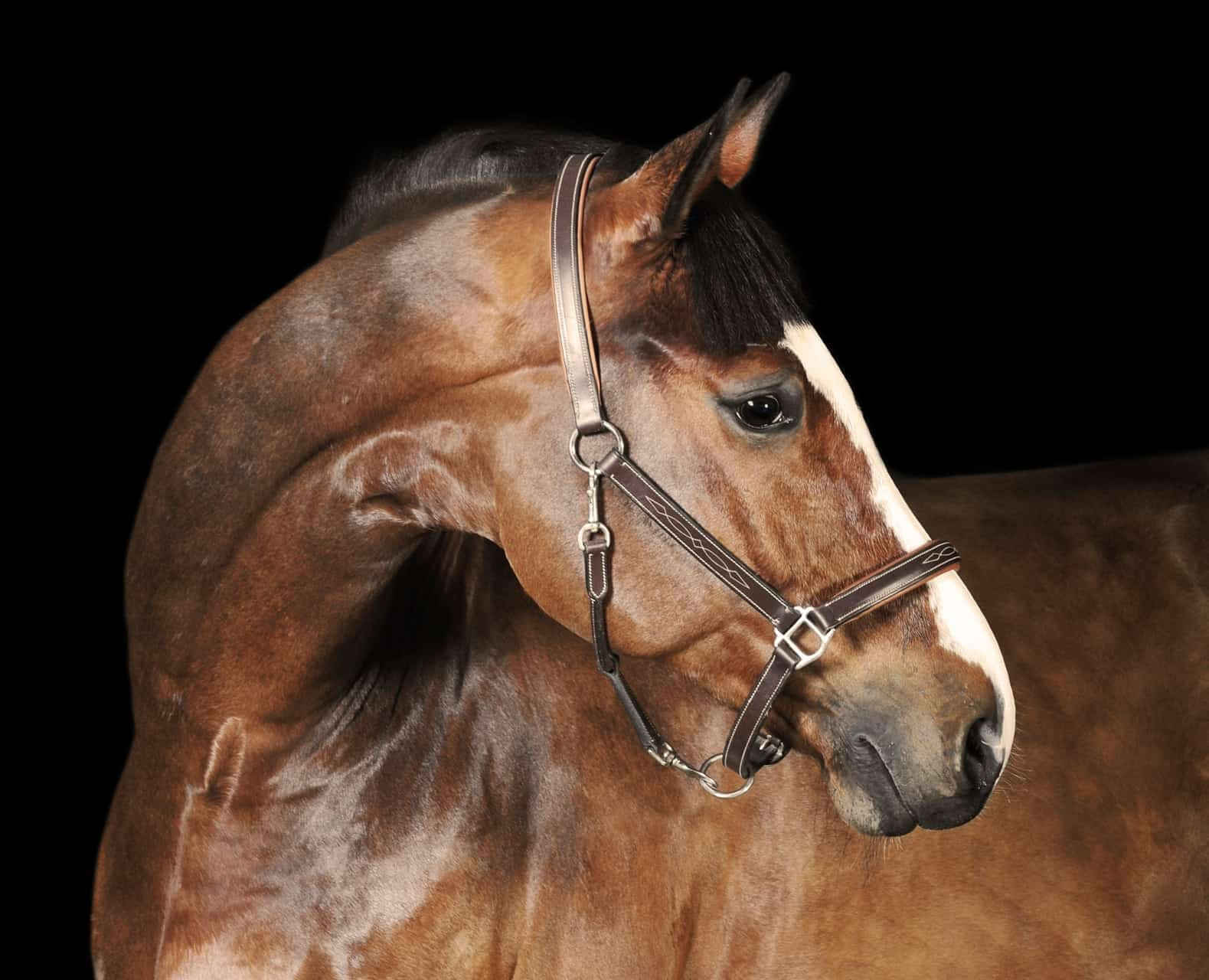 Bony Changes in the Equine Neck – The Horse
