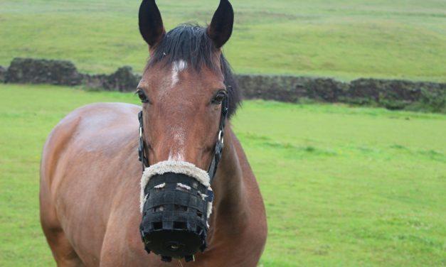 Feeding Metabolic Horses
