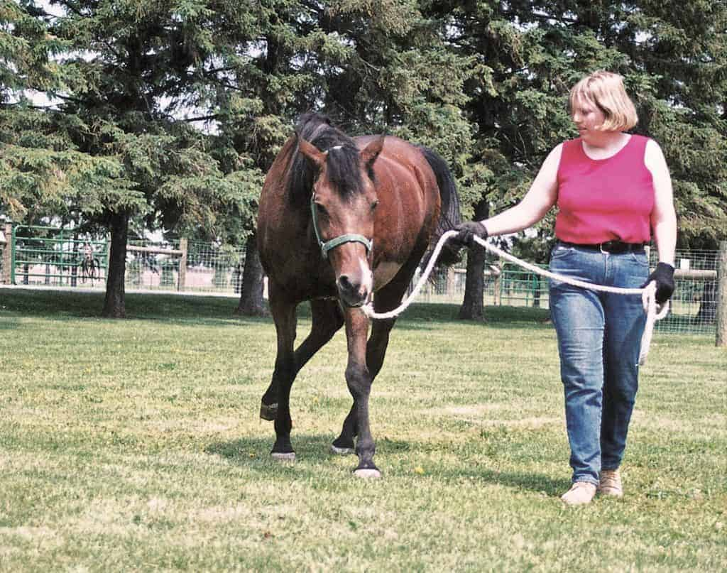 what is epm in horses