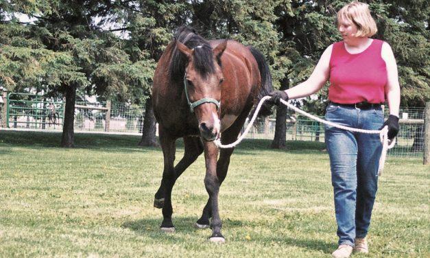 Study: EPM-Causing Parasites Ubiquitous in U.S. Horses