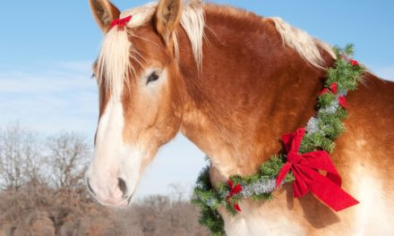 """BHS: """"A Horse is for Life, Not Just for Christmas"""""""