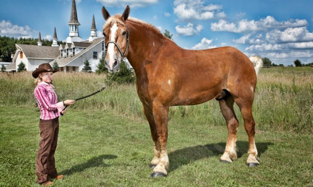 Equine World Records Reviewed