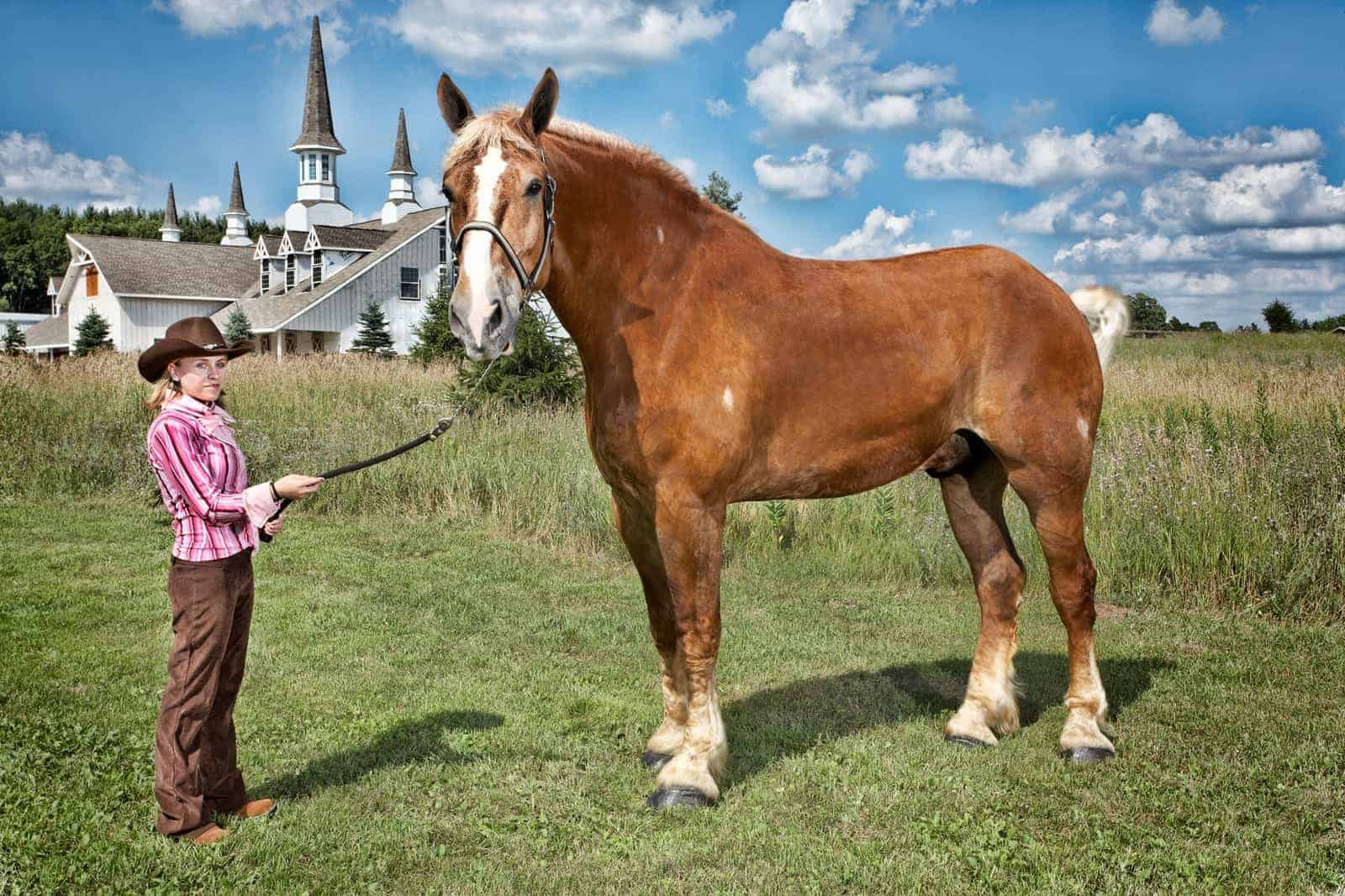 Equine World Records Reviewed – The Horse