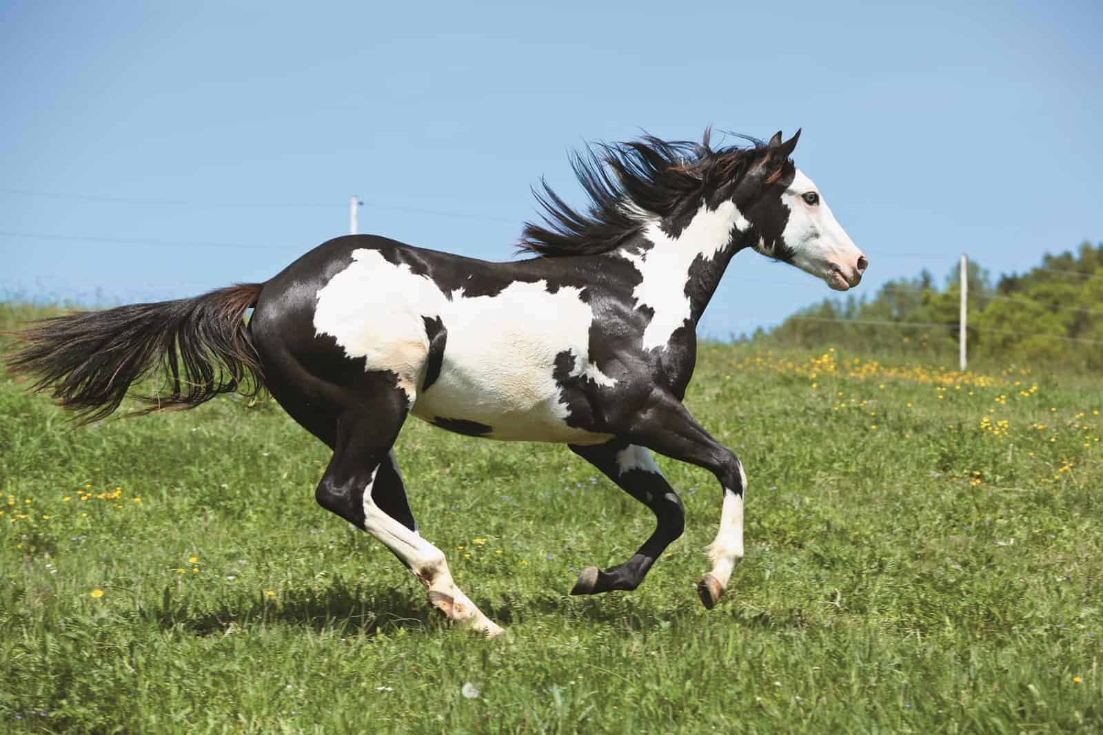 Genetic Disorders Breed By Breed The Horse