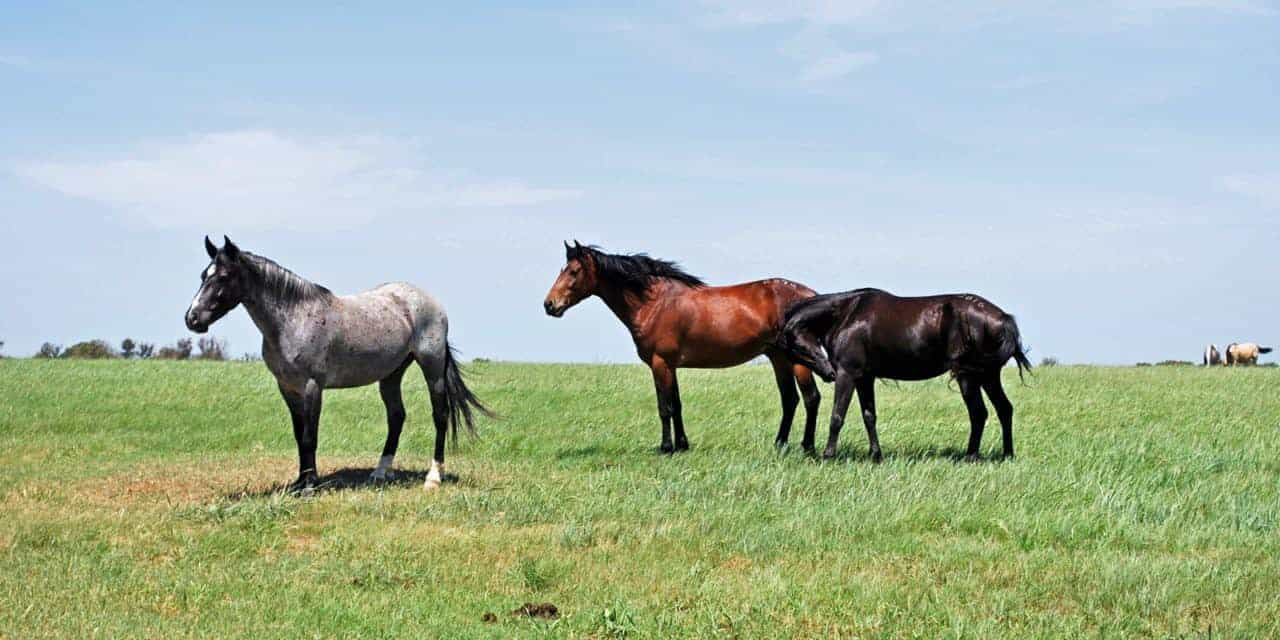 BLM Seeking Input on Proposed Mont. Wild Horse Ecosanctuary