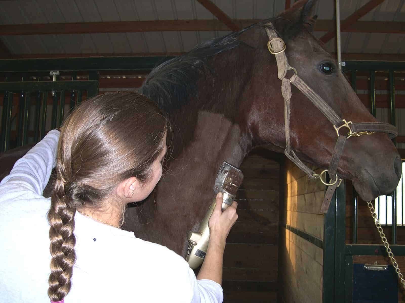 Clipping Your Horse's Coat