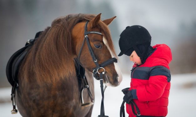 The Smart Equestrian's List to Brightening the Winter Blues