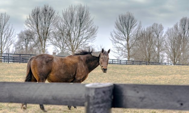 Abortion in Horses: Incidence and Causes