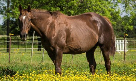 Late-Term Pregnancy Troubles in Broodmares