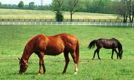New Biomarkers for Diagnosing Bacterial Placentitis in Mares