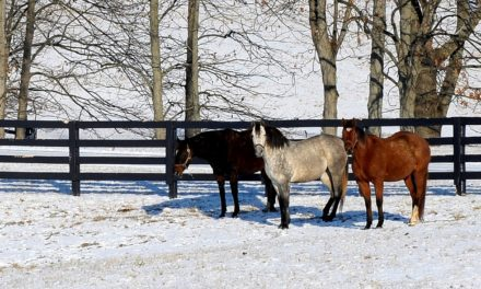 How Season Impacts Horses' Insulin Secretion, Metabolism