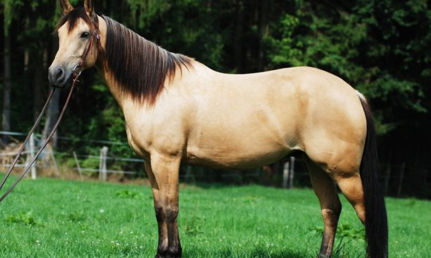7 Horse Conformation Flaws: Piecing Together What We Know