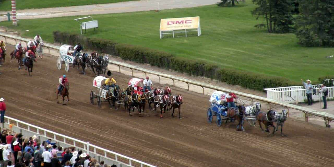Horse Dies After Injury In Calgary Stampede Event The Horse
