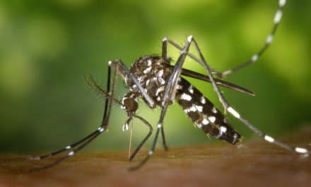 Zika Virus: Are Horses at Risk?