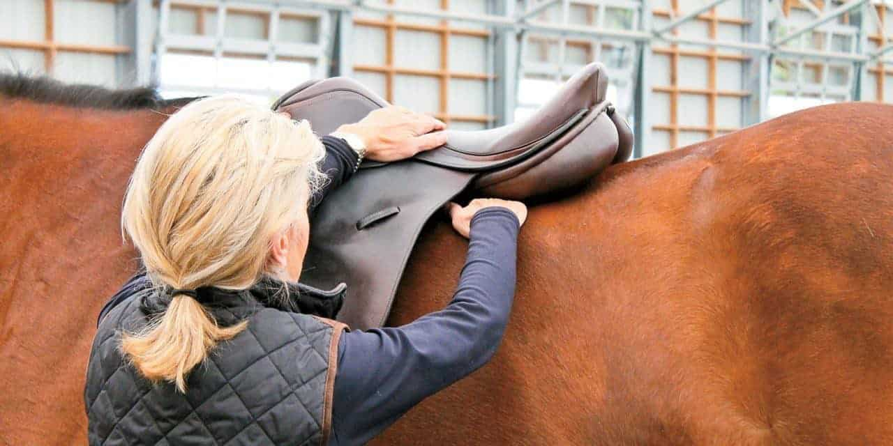 How Veterinarians Evaluate Saddle Fit