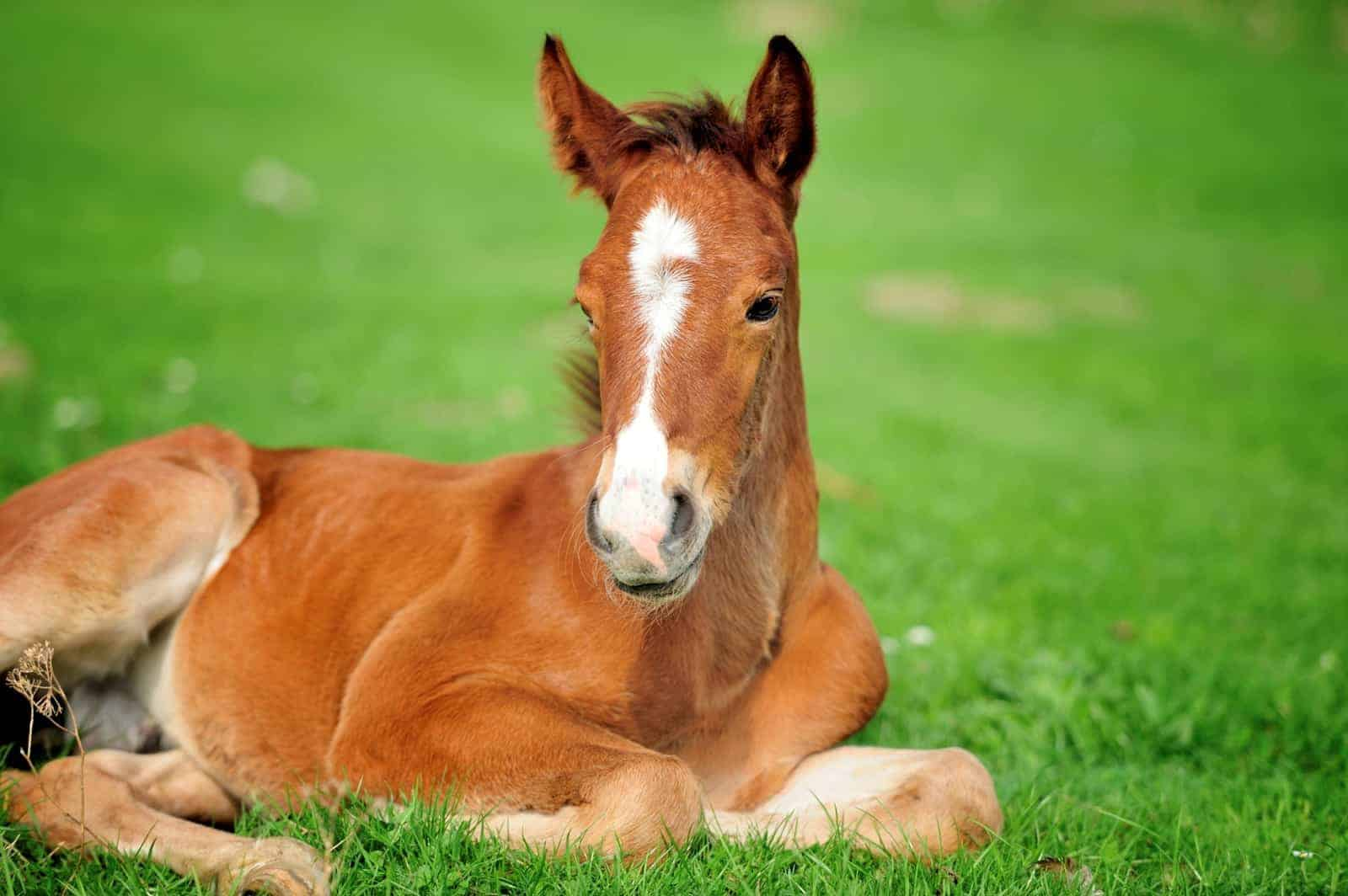 Caring For Orphan Foals The Horse
