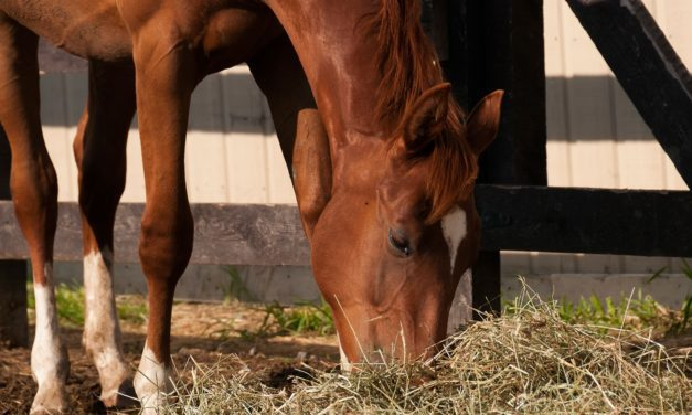 FAQs About Horses and Alfalfa