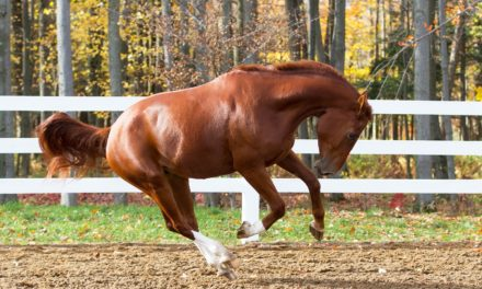 It's All in the Genes: Horse Traits and Heritability