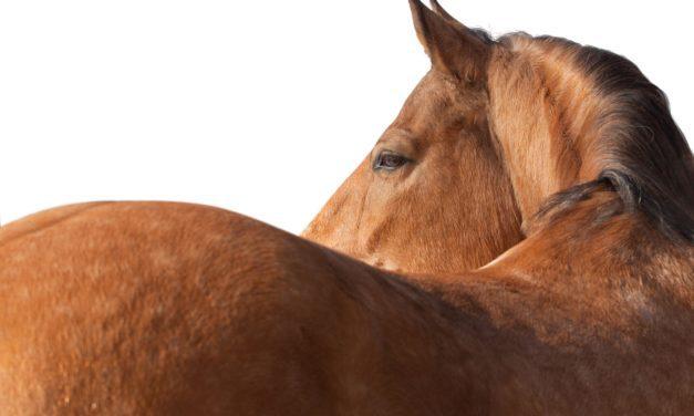 Will Whey Protein Improve My Horse's Topline?