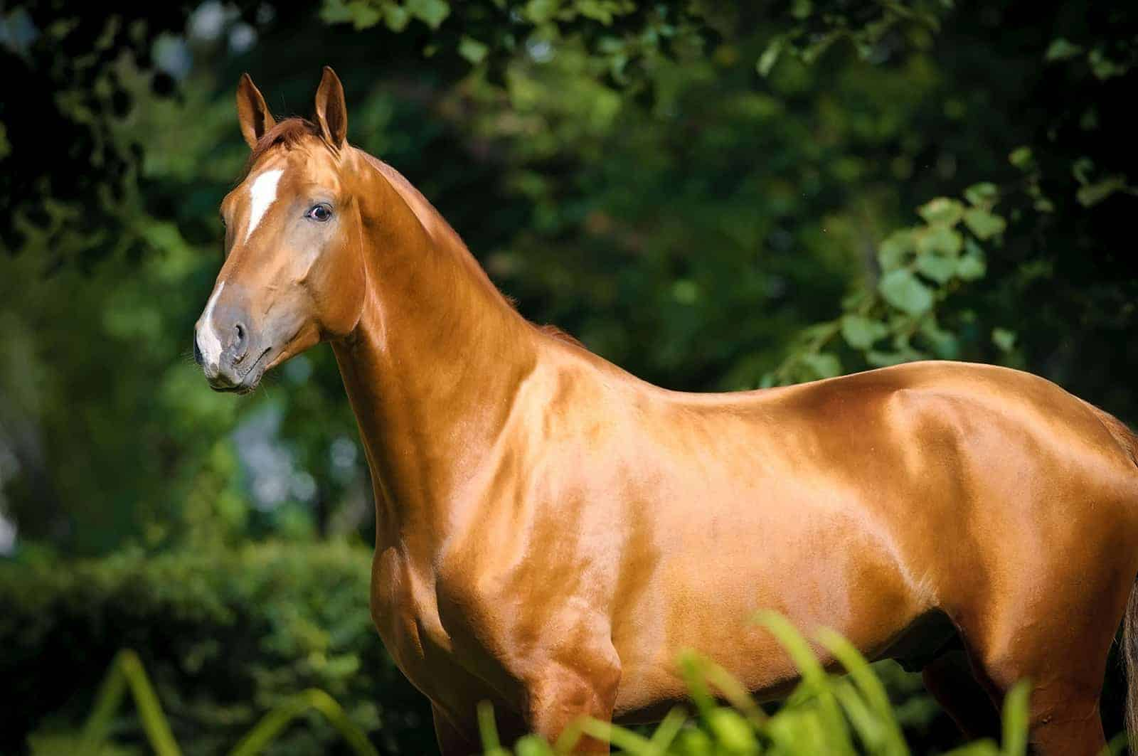 Your Guide To An Outrageously Shiny Equine Coat The Horse