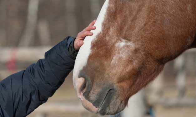 Do Children See Signs of Poor Equine Health, Welfare?