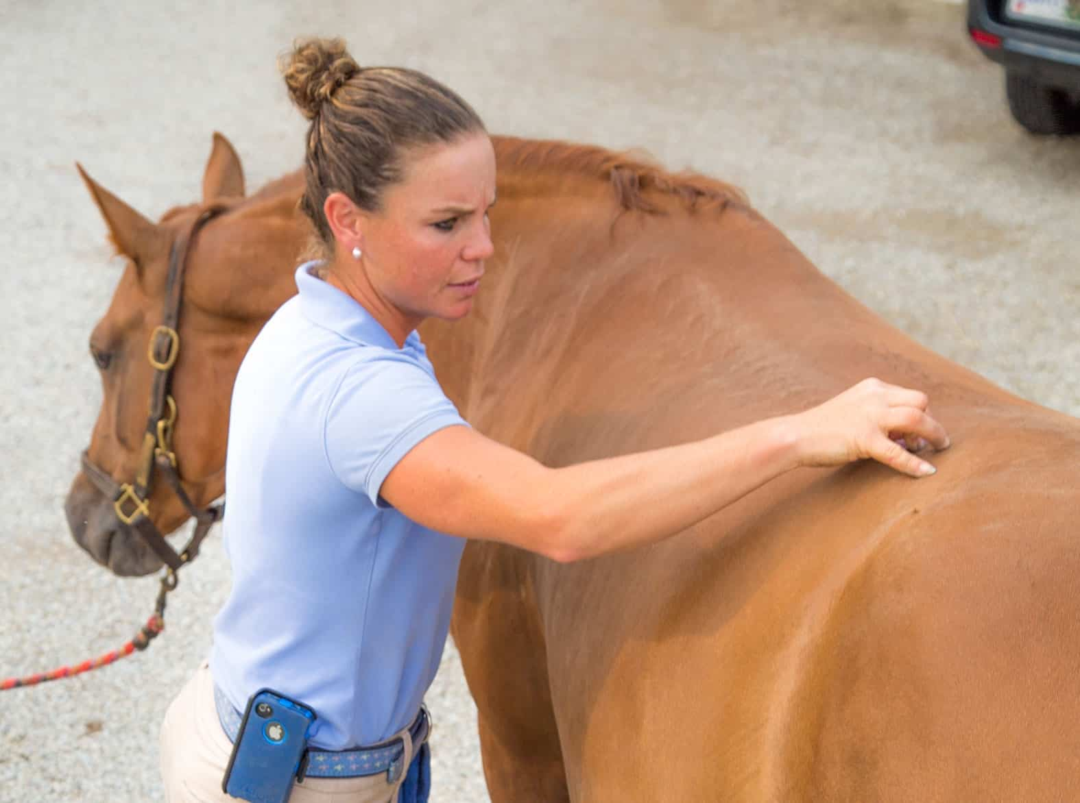 Problems in the Horse's Hip and Pelvis – The Horse
