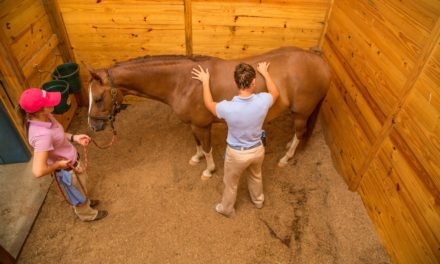 Equine Rehabilitation Similar to Sports Therapy for People