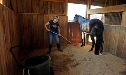 Time-Saving Tips: Horse Barn Chores