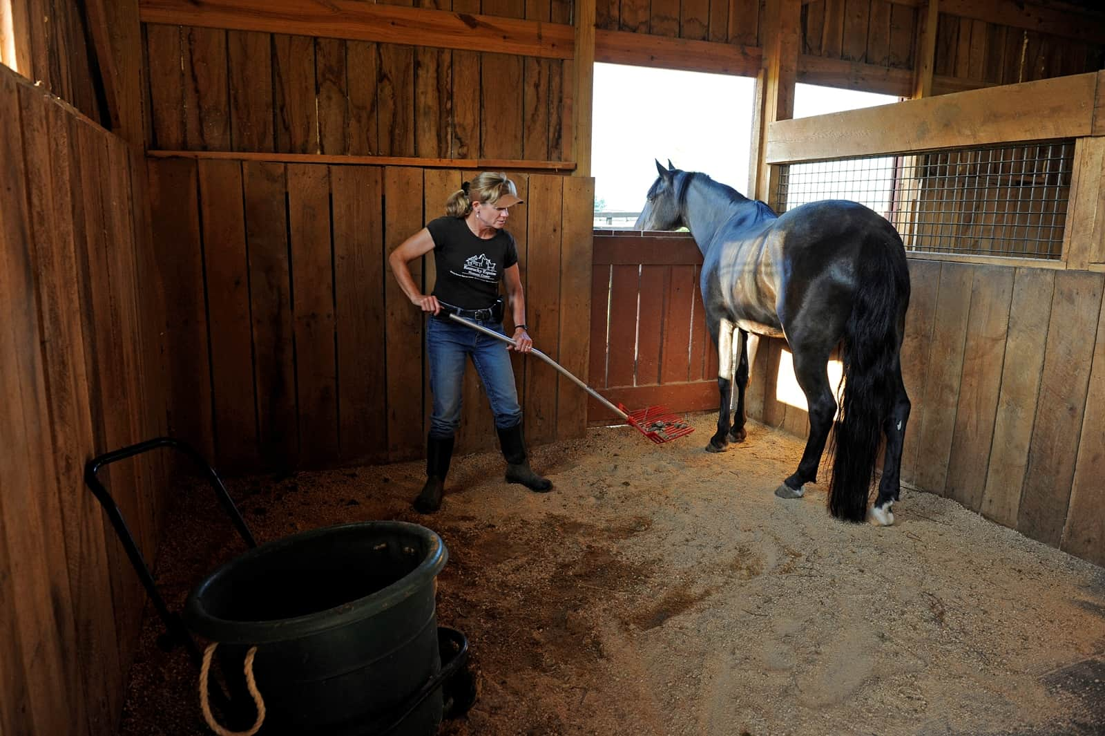 Considerations for Selecting Horse Bedding Materials
