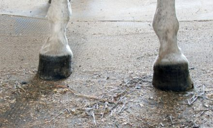 Club Foot Heritability in Horses