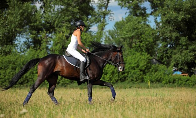 Conditioning Horses Through the Seasons: Spring and Summer