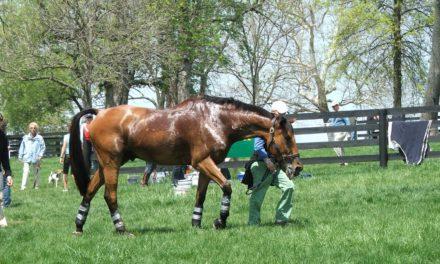 Managing Horses in the Summer Heat