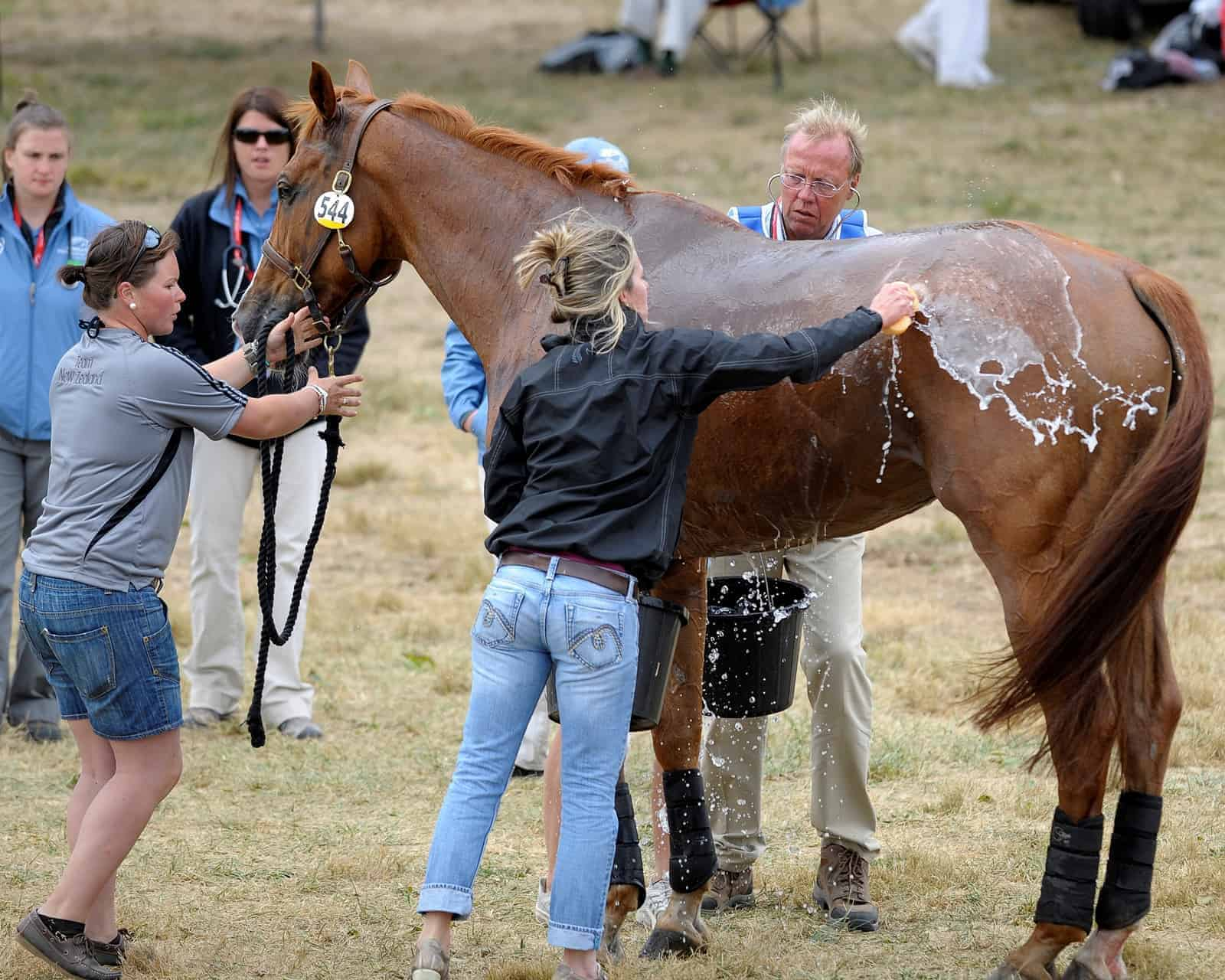 Managing Dehydration, Exhaustion in Horses