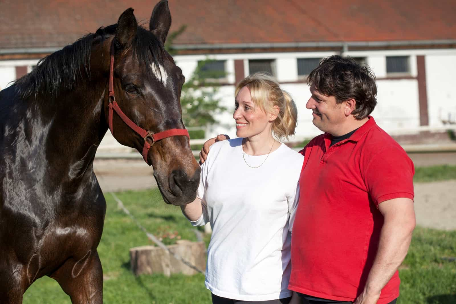 Estate Planning Tips for Horse Owners