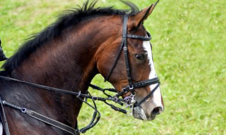 Researchers Evaluate Head Control Equipment Use in Horses