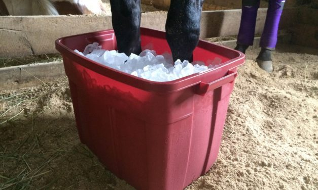 How to Support Horses With Acute or Chronic Laminitis