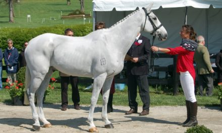 New Zealand Horse Euthanized Following Rolex Cross-Country