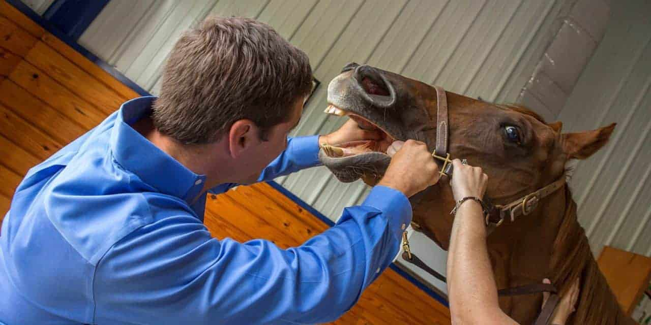 Equine Dental Exams in Five Easy Steps – The Horse