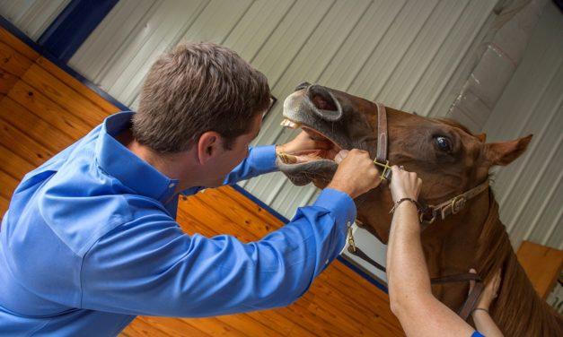 Dental Care of the Geriatric Horse